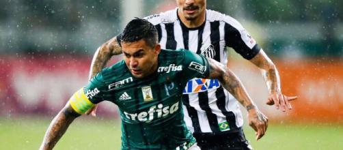 Santos x Palmeiras duelam neste sábado (29). (Arquivo Blasing News)