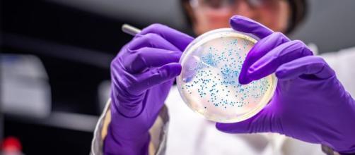 Le ricercatrici italiane che hanno isolato il coronavirus.