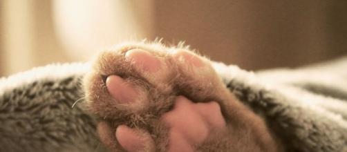 chat ces excellentes raisons de ne pas dormir avec lui