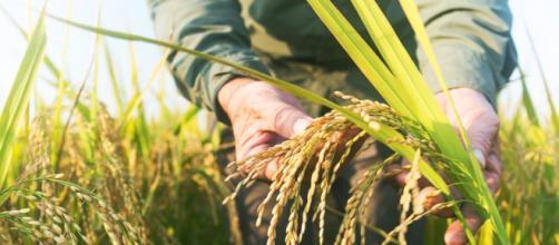 L'agricoltura sostenibile entra su scala maggiore nelle multinazionali