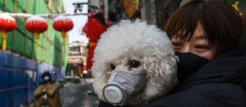 China: Shenzhen prohibiría comer perros y gatos | GQ México y ... - com.mx
