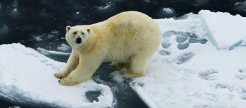 Melting ice caps have an effect on polar bears, sea level rise. [Image source/Anna Fomitchev YouTube video]