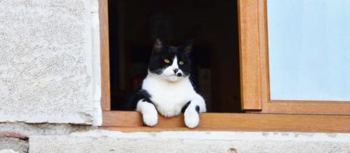 chat : pourquoi aime-t-il tant entrer et sortir?