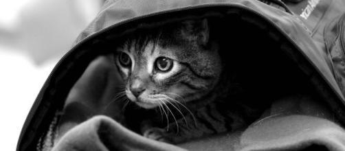 Coronavirus: le nombre d'abandon de chat et chien inquiète la SPA