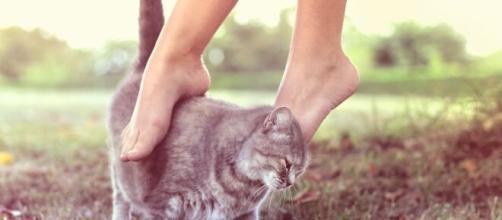 chat s'il vous montre ses fesses ce n'est pas seulement pour dire bonjour