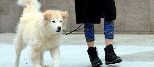 """il cane deve essere """"necessariamente in vita"""": battuta del sindaco del Comune di Mamoiada sulle passeggiate inopportune"""