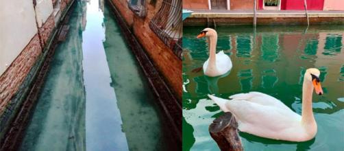 Los animales vuelven a los canales de Venecia, que vuelven a estar limpios durante la cuarentena en Italia.