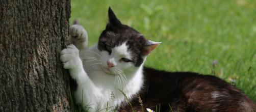 chat et coronavirus dans quelles mesures peut-il sortir