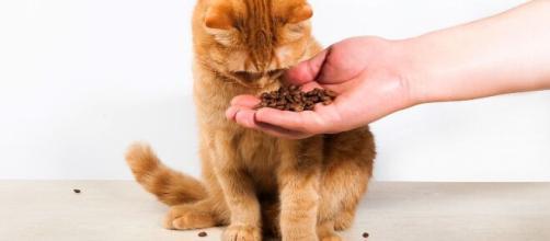 Pourquoi mon chat vomit ? Voici ce qui pourrait en être la cause