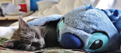 chat : comment s'en occuper correctement pendant le confinement