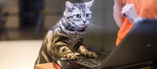chat quand tu travailles de la maison en confinement