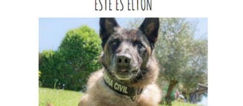 Fallece Elton, el perro policía que encontró a Diana Quer o a Gabriel