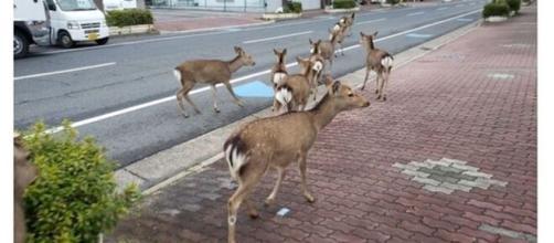 Animales que han invadido las ciudades mientras la gente está en ... - cuantarazon.com