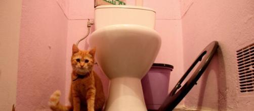 chat s'il vous suite aux toilettes ce n'est pas seulement car il a peur