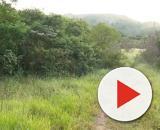 Kauê foi morto em um matagal da região. (Foto:Reprodução/ Record TV do RS))