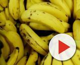 Banana é uma fruta excelente para a digestão. (Arquivo Blasting News)