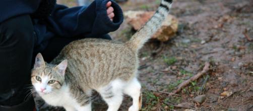 chat et coronavirus la science a parlé