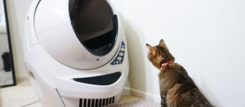 5 raisons qui expliquent pourquoi un chat n'utilise pas sa litière
