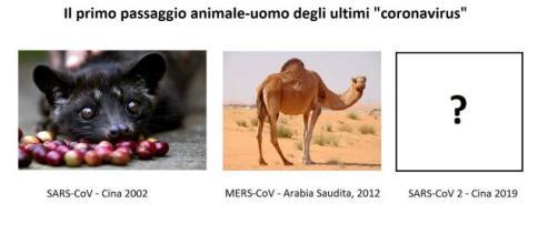 I coronavirus che infettano l'uomo possono arrivare dagli animali. Adesso si cerca l'animale ospite del SARS-CoV-2.