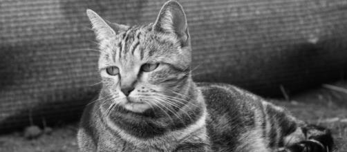 Les pires excuses utilisées par des maitres pour abandonner leur chat