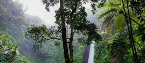 Rainforest - the loss of trees could affect the planet - Image credit - skitterphoto / Pixabay
