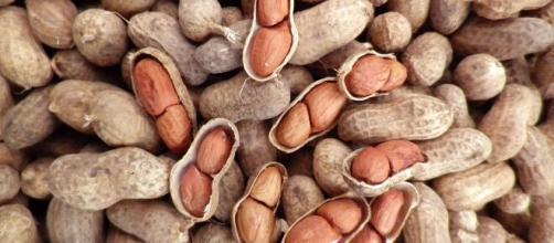 Amendoins são excelentes fonte de proteína. (Arquivo Blasting News)