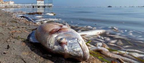 El Mar Menor sigue presentando síntomas de contaminación (Foto de RTVE)