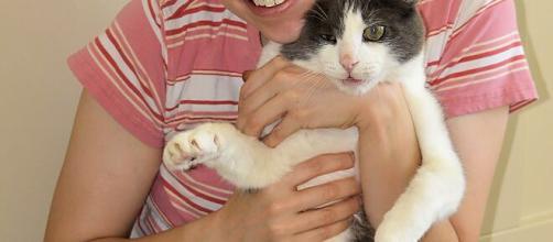 Pourquoi votre chat n'aime pas être pris dans les bras