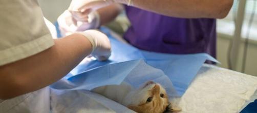 Chat : les vétérinaires tirent la sonnette d'alarme auprès des propriétaires