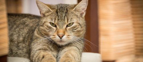 chat : la Chine l'enlève de la liste des animaux comestibles