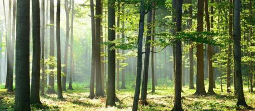 Covid-19: La déforestation détruit les barrières qui nous séparent de la vie sauvage