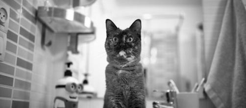 chat s'il vous suit dans la salle de bain ce n'est pas seulement pour l'eau