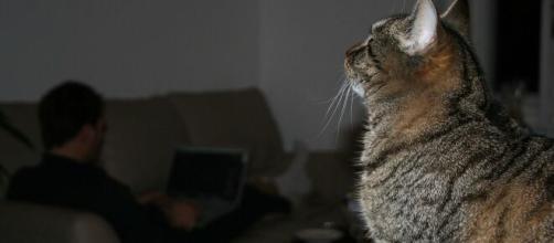 votre chat vous supporterait moins que d'habitude