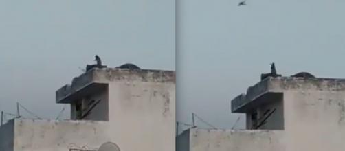 Vídeo mostra macaco 'empinando' pipa na Índia. (Reprodução/Redes Sociais)