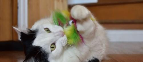 chat : s'il vous attaque ce n'est pas seulement pour jouer