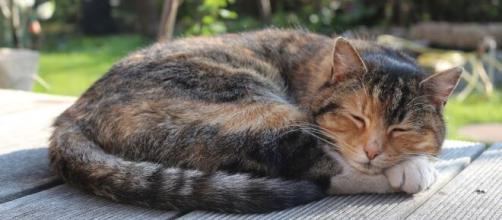 Pourquoi mon chat dort toute la journée ? Symptômes et Solutions - adorablesbetes.com