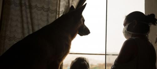 Cómo entretener a tu mascota en tiempo de cuarentena por ... - andina.pe