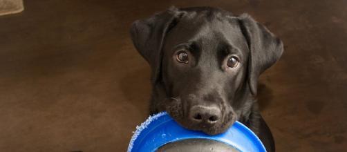 Covid-19: cães e gatos são ajudados em meio a pandemia. (Arquivo Blasting News)