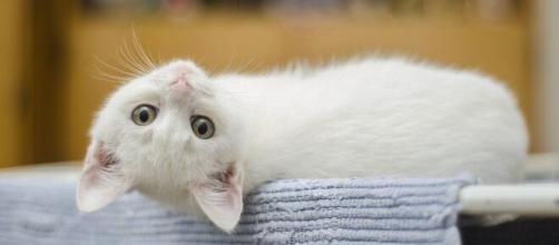 Un chat qui roucoule est toujours bon signe