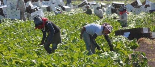 Necesario, proteger a trabajadores migrantes | Ayuda Migrante MX - ayudamigrantemx.org
