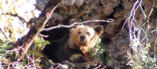WWF no se cree que el oso muriera por causas naturales.