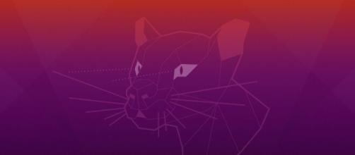 """Ubuntu 20.04 """"Focal Fossa"""" é lançado com kernel Linux 5.4 e VPN. (Arquivo Blasting News)"""
