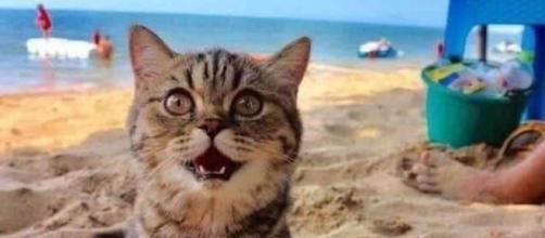 Un chat va pour la première fois à la plage. Credit : Semsema Mahmoud