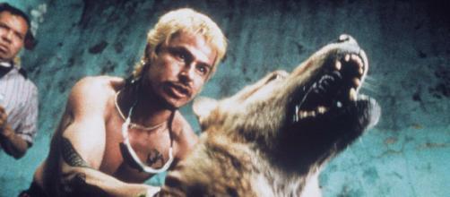 'Amores Perros' é um filme da cena indie cinematográfica. (Arquivo Blasting News)