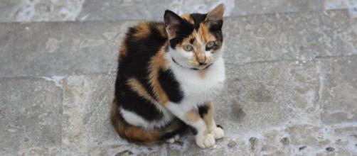 le chat va retrouver ses maîtres 4 ans après (image d'illustration)