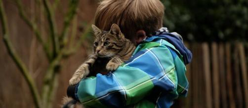 Avoir un chat perm - pxhere.com