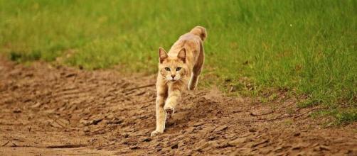 chat : s'il devient fou après avoir fait ses besoins ce n'est pas seulement parce qu'il est heureux - photo pixabay