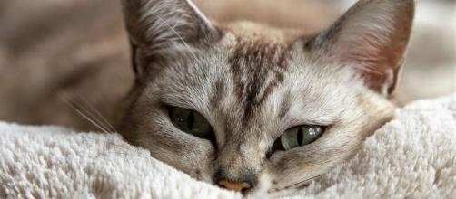 chat : s'il vous regarde avec insistance ce n'est pas pour n'importe quelle raison