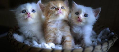 Les chats ont eux aussi besoin d'attention en cette période de confinement (source : Quangpraha pixabay.com)