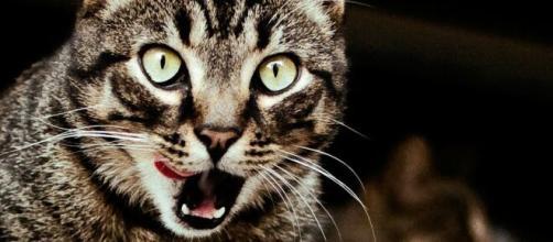 chat : il séquestre son humain dans la cuisine pendant des jours - photo pixabay